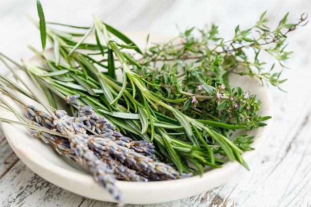 Świeże zioła w kuchennym królestwie – jakie warto mieć, które hodować?