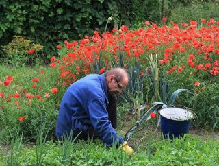Jak przygotować ziemię pod warzywa, gdy nadchodzi wiosna?